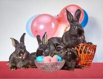 Quattro bunnys ed uova di Pasqua fotografie stock libere da diritti