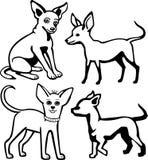 Quattro cani della chihuahua Immagini Stock Libere da Diritti