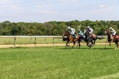 Quattro cavalli di corsa dei cavallerizzi gallop Fotografie Stock