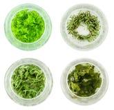 Quattro ciotole di tè verde Immagine Stock Libera da Diritti