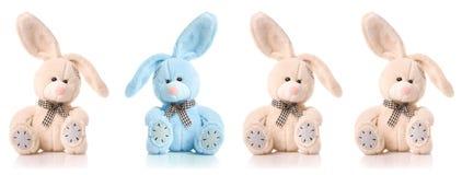 Quattro conigli svegli isolati su priorità bassa bianca Fotografia Stock