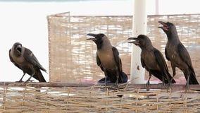 Quattro corvi si siedono sul recinto