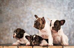 Quattro cuccioli del bulldog francese si trova sul pavimento dei bordi immagini stock