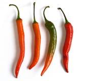 Quattro di peperoncino di cayenna Fotografia Stock Libera da Diritti