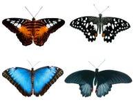 Quattro farfalle Fotografie Stock