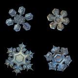 Quattro fiocchi di neve isolati su fondo nero Immagine Stock Libera da Diritti