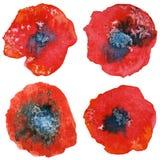 Quattro fiori stilizzati del papavero dell'acquerello Illustrazione dell'acquerello royalty illustrazione gratis