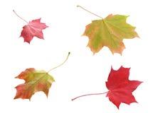 Quattro foglie di autunno variegate variopinte Fotografie Stock Libere da Diritti