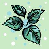 Quattro foglie verdi stilizzate illustrazione di stock