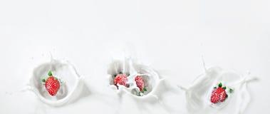 Quattro fragole deliziose che scendono giù nel latte con i cali Fotografia Stock