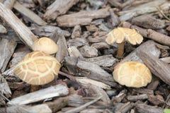 Quattro funghi divertenti immagini stock libere da diritti