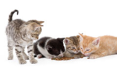 Quattro gattini si siede Fotografia Stock