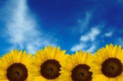 Quattro girasoli con la priorità bassa del cielo Fotografie Stock Libere da Diritti