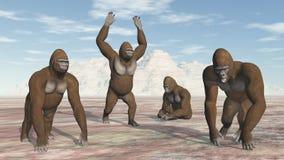Quattro gorille Immagini Stock