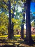 Quattro grandi alberi vicino alla casa immagine stock