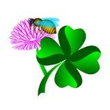 Quattro hanno coperto di foglie trifoglio con il fiore e l'ape Fotografia Stock