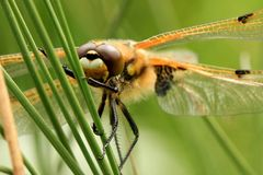 Quattro hanno macchiato la mosca del drago dell'intercettore Fotografia Stock Libera da Diritti