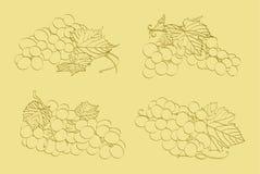 Quattro mazzi di uva Fotografie Stock