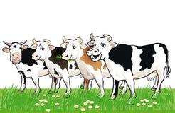 Quattro mucche macchiate felici in erba Fotografia Stock Libera da Diritti