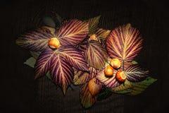 Quattro nocciole su un variopinto asciugano le foglie Fotografia Stock Libera da Diritti