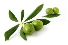 Quattro olive verdi e foglie dell'oliva Immagine Stock Libera da Diritti