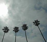 Quattro palme sotto le nuvole Fotografia Stock Libera da Diritti