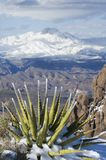 Quattro picchi ed agavi dello Snowy immagine stock libera da diritti