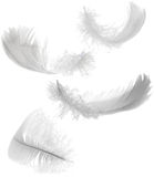Quattro piume bianche Fotografia Stock Libera da Diritti
