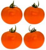 Quattro pomodori Fotografie Stock Libere da Diritti