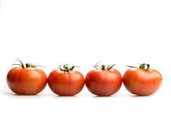 Quattro pomodori rossi realistici in una linea isolata nel fondo bianco Fotografie Stock