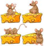 Quattro pose del topo e del formaggio illustrazione di stock