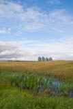 Quattro scomparti del granulo in un campo Fotografie Stock Libere da Diritti