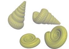Quattro seashells beige illustrazione vettoriale