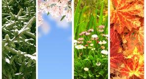 Quattro stagioni dell'anno Fotografia Stock