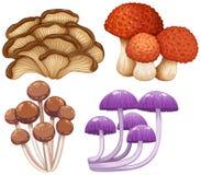Quattro tipi di funghi selvaggi Immagini Stock