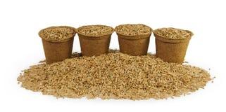 Quattro vasi della torba riempiti di semi dell'avena Fotografie Stock