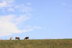 Quattro vitelli su pasticceria immagini stock libere da diritti
