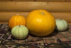 Quattro zucche colorate differenti fotografia stock libera da diritti