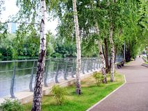 Embankment of the river with beautiful trees royalty free stock image