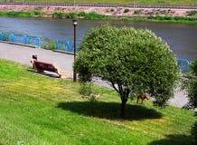 Quay en el parque de la ciudad en verano fotos de archivo libres de regalías