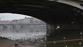 Quay na rzekach zdjęcie wideo