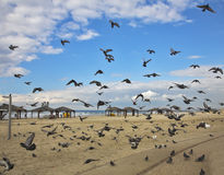 Quay of Tel Aviv. The flight pigeons Royalty Free Stock Photos