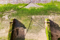 Quay wall with algaes Royalty Free Stock Photography