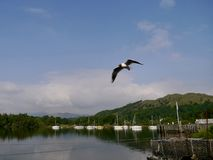 Quayside at Ambleside, Lake District, England. Quayside at Ambleside Lake District with prominent seagull Stock Photo