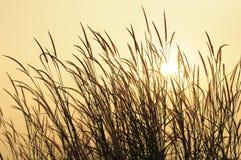 Que diriez-vous du coucher du soleil ? Image libre de droits