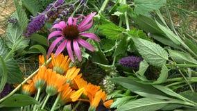 Que giram várias ervas médicas e da especiaria frescas bonitas florescem o fundo vídeos de arquivo