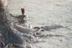 Que homem ascendente eu sou squirrell Imagem de Stock