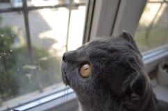 ?at que mira hacia fuera la ventana Foto de archivo libre de regalías