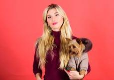 Que raças do cão devem vestir revestimentos A mulher leva o yorkshire terrier Os cães precisam a roupa Abraço louro adorável da m imagem de stock royalty free
