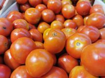Que são os benefícios de comer tomates? imagem de stock royalty free